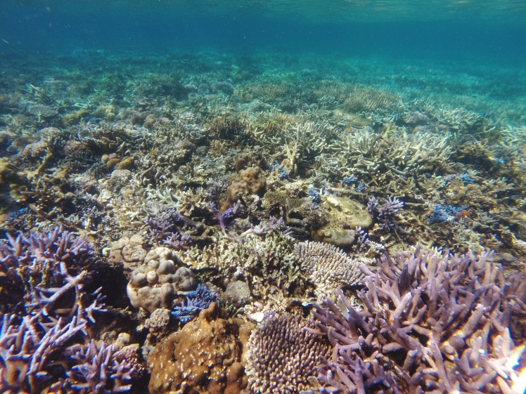 Culion-Bugor Reef-Crowning Glory