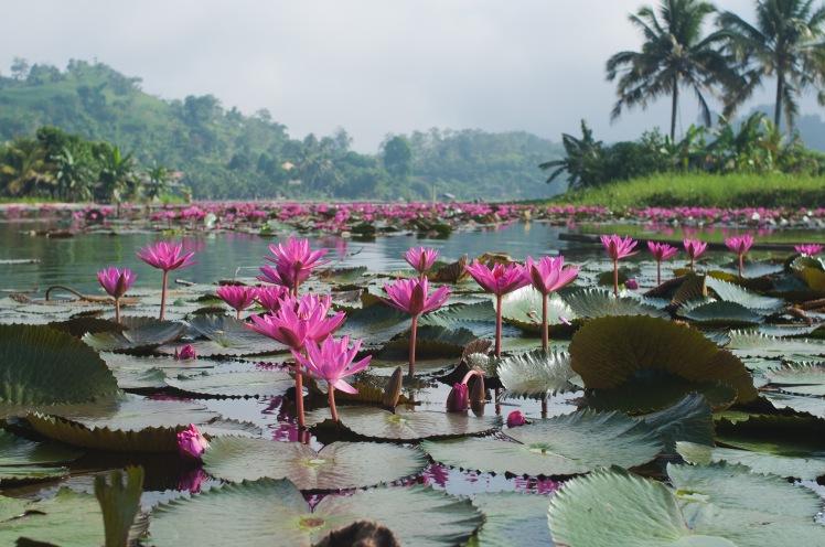 Lake Sebu_14